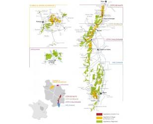 Dégustation n°2 : découverte de la Bourgogne Viticole