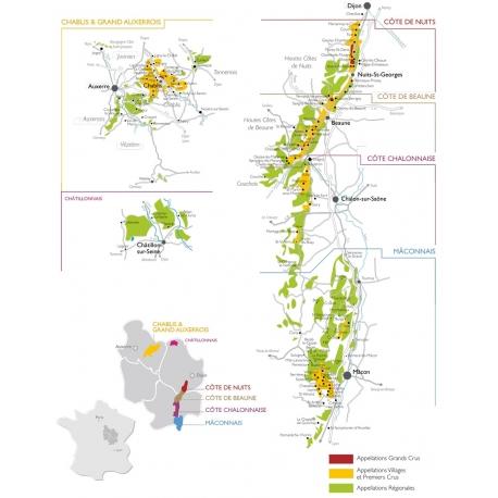 Dégustation n°1 : découverte des vins de Bourgogne