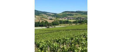 Bourgogne Passe Tout Grains